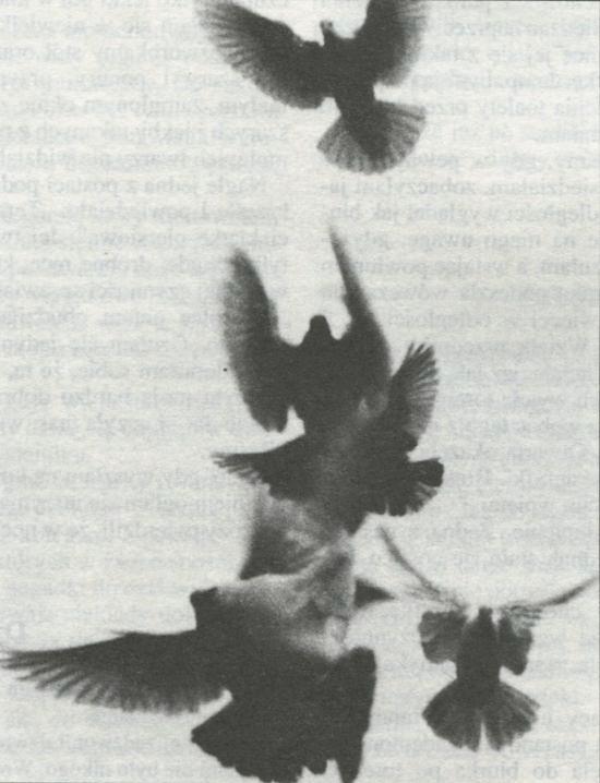 Śmierć wędrownych ptaków - NŚ 02/1994